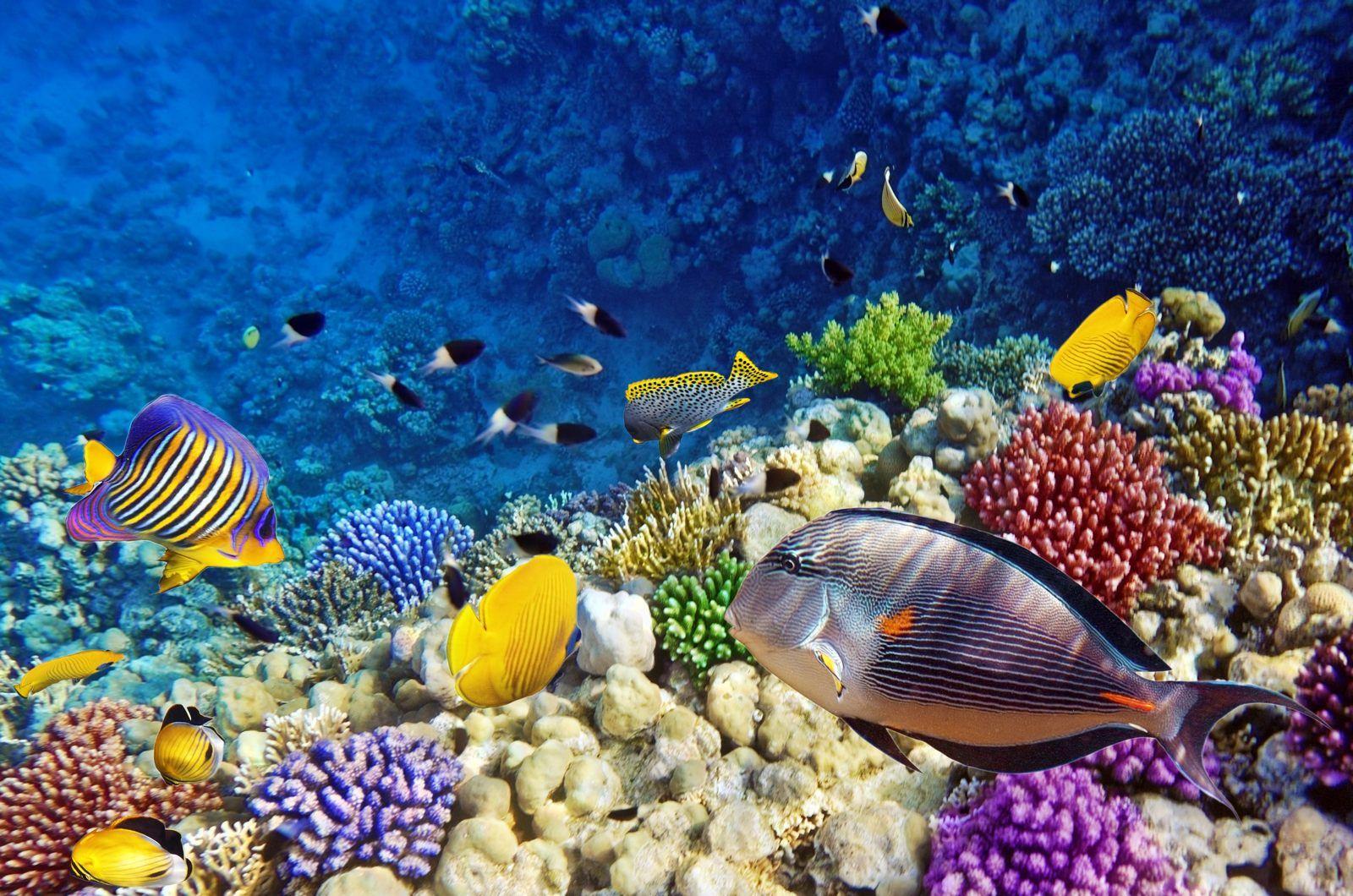 Marsa Alam Coral Reef