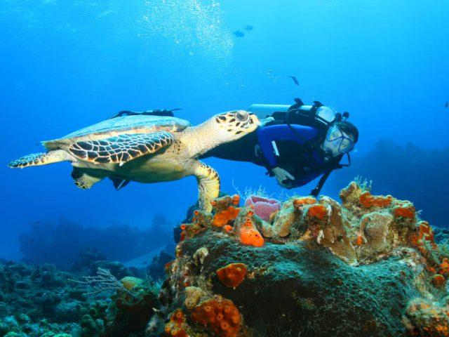 Swim with Turtle