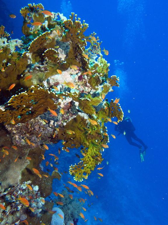St. Johns Dangerus Reef